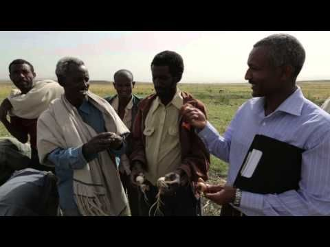 Agriculture, water and climate change in Africa