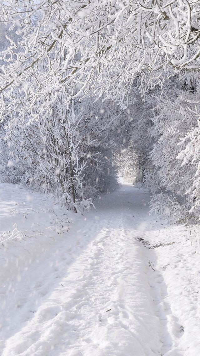 Winter Wonderland. iPhone wallpaper