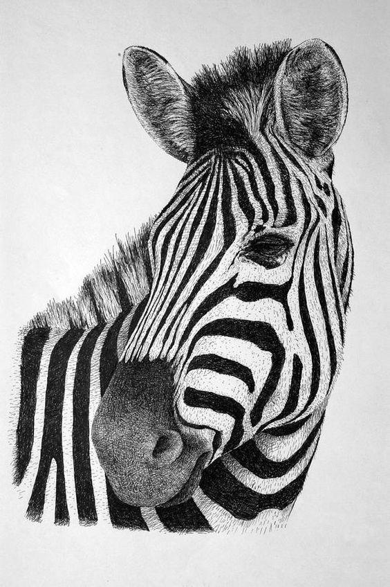 Zebra Drawing - Zebra by Rens Ink