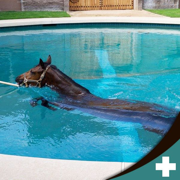 Cave Creek Equine Surgical and Diagnostic Imaging Center