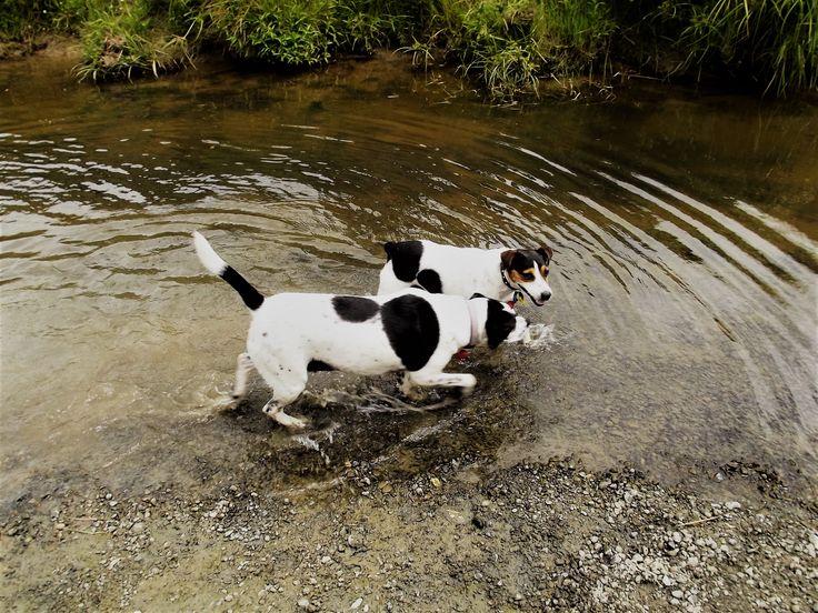 Mollie and Floyd enjoying a dip with the eels at Mangaone Stream, Palmerston North, Manawatu