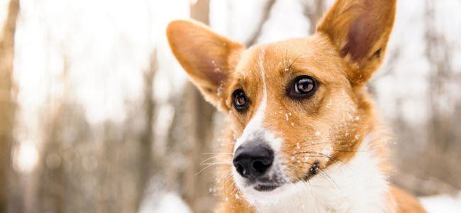 ecole-dressage-canin-montreal-quebec-comportementaliste