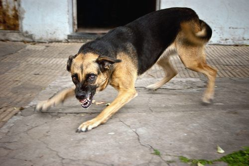 Dogs are generally friendly animals, but there are exceptions to every rule. Some dogs can be vicious and attack without warning, causing serious and debilitating injuries. In cases of children or elderly individuals being bitten, the risk of critical injury and death goes up. Here's how to handle a dog bite injury claim if you or a loved one were bitten or attacked by a dog.