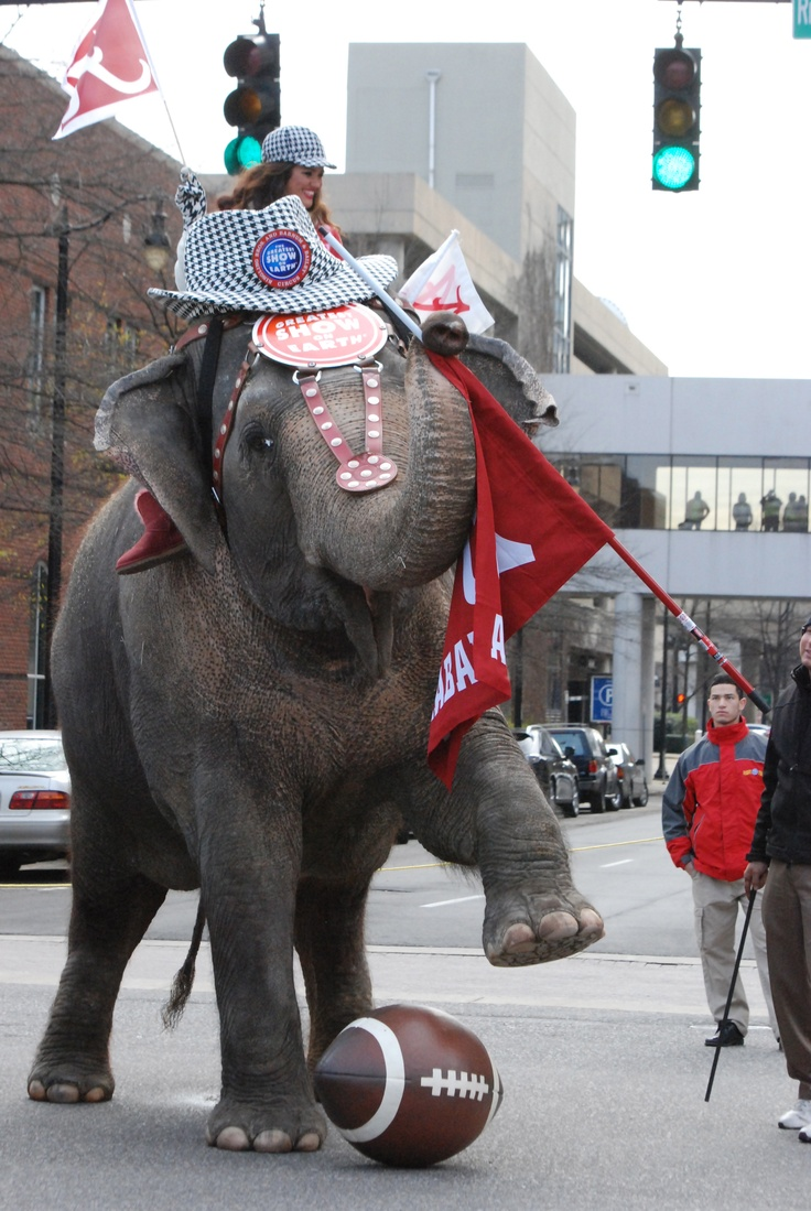 162 Best Images About Bama Elephants Amp Others On Pinterest