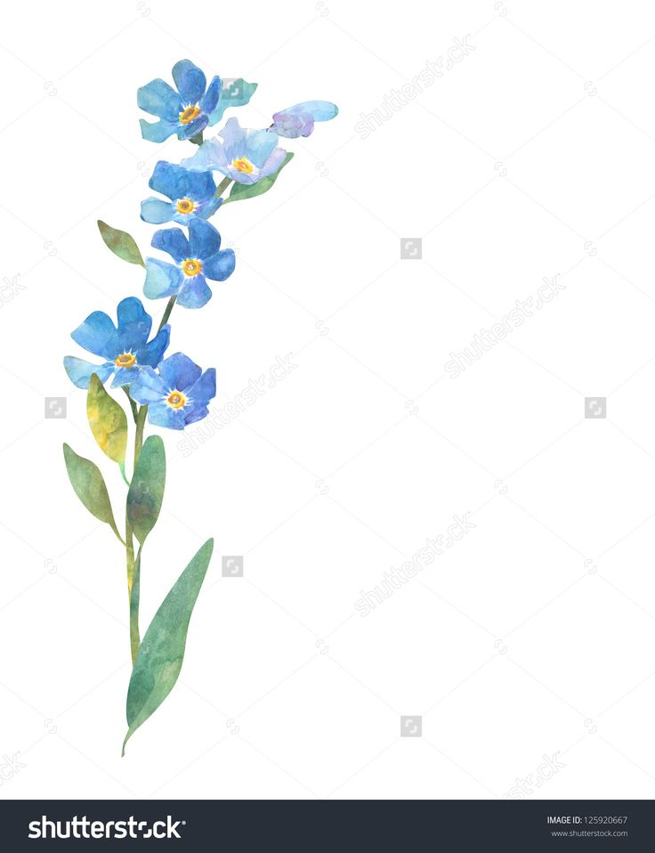 Best 25 forget me not ideas on pinterest forget me not tattoo forget me not flower buy this stock illustration on shutterstock find other images ccuart Image collections