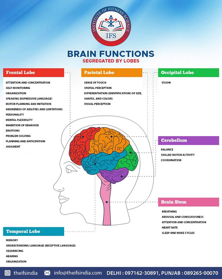 The brain is divided into main functional sections, called ...