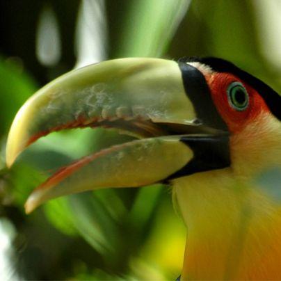 Tendrás la chance de ver de cerca la fauna más diversa y los colores más apasionantes de la naturaleza argentina en el Parque Nacional Iguazú.