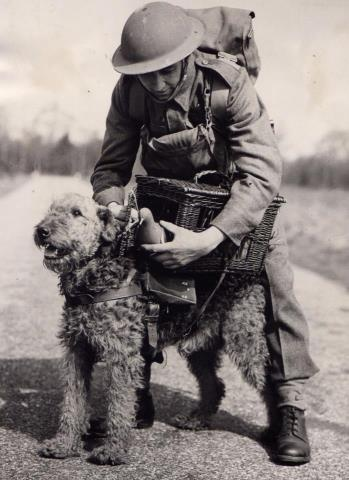 "Heros ""Airedale & Soldier."" Were Airedales good soldiers? No doubt, they're brave. But do they always follow orders?"