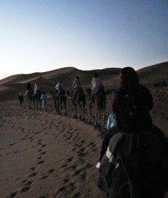 モロッコサハラ砂漠をラクダで大行進  早朝の朝日を見るために時起床して四駆に乗っからラクダに乗り換え このシーン何か良いでしょう是非tourでも良いからオプションとかで体験してみてね 大体往復でだよ  #ラクダ #サハラ砂漠 #朝日鑑賞 #モロッコ #ツアー #海外旅行 #オプショナル tags[海外]
