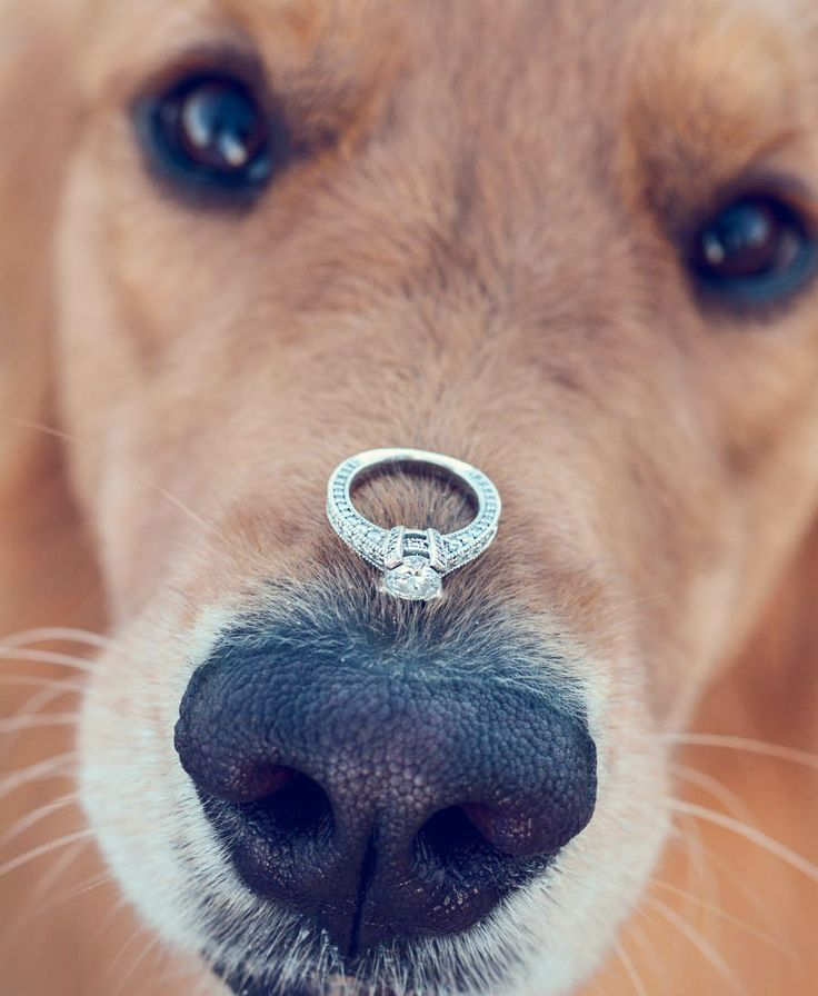 Casamento com fofura: 15 fotos lindas de cachorros no lugar das damas de honra