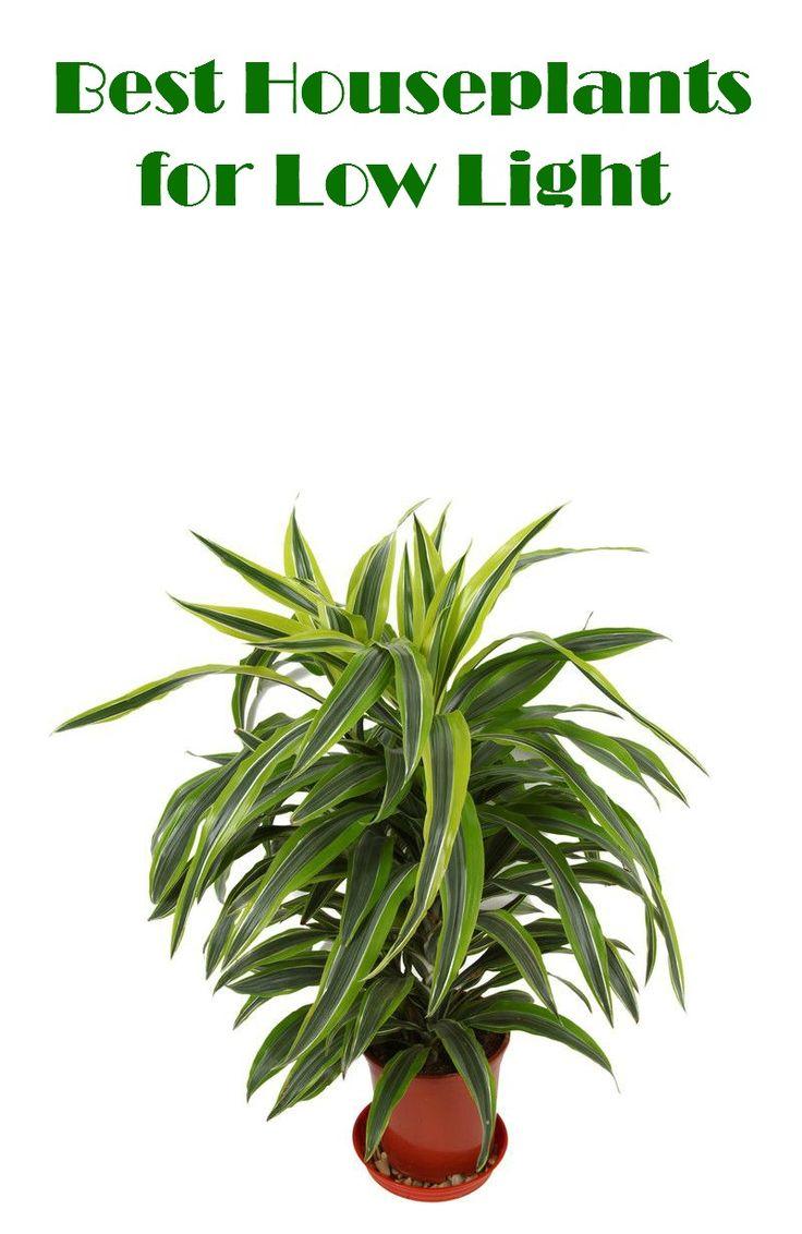 Best Houseplants for Low Light
