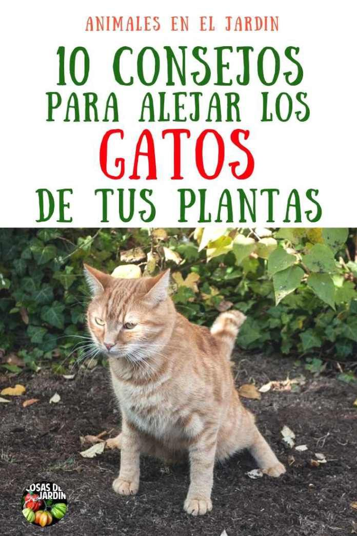 10 consejos para mantener a los gatos lejos de tus plantas