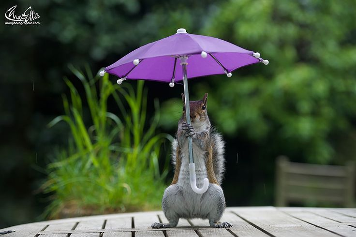 Photographer Gives Squirrel A Tiny Umbrella To Protect Itself From Rain   Bored Panda