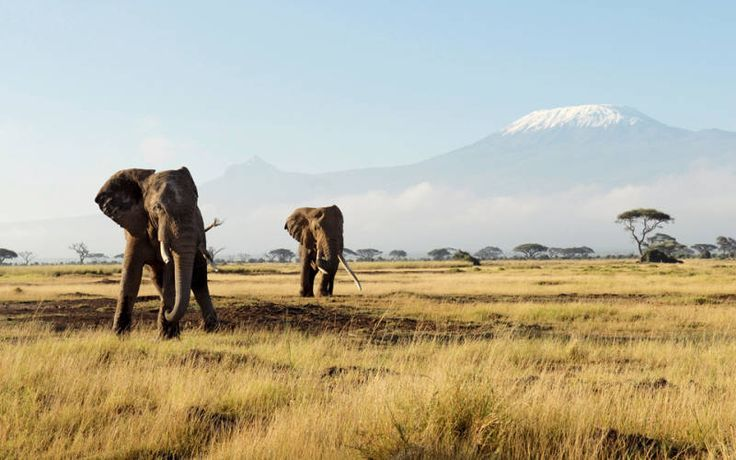 #SafariinKenya is very importantin exploring such kind environment. The main promising attractions of Kenyasafari tours are grass and flesh eating animals. Find out more @ http://articles.pubarticles.com/how-to-are-you-planning-for-safari-in-kenya-to-find-the-unlimited-excitement-1467023733,1639324.html