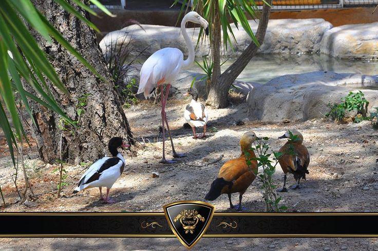 Vogue Hotel' e gidip de hayvanat bahçesini gezmeden olmaz #Vogue #Hotels & #Resorts #Bodrum #Holiday #Zoo #Mood #Funny #Beautiful #Animals
