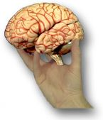 Videos & instructions on how to do neurological exams- test cranial nerves - OT