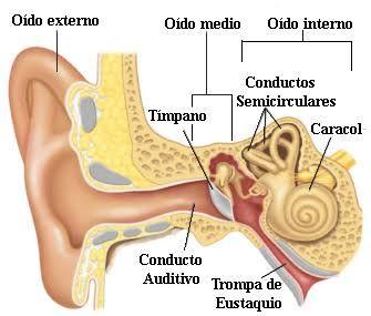 Aparato auditivo del ser humano capta las ondas sonoras
