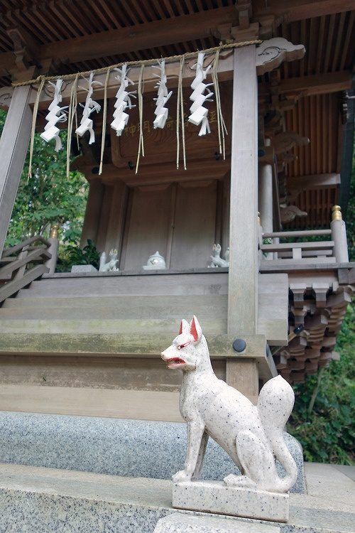 The fox is messenger of the god (Inari)