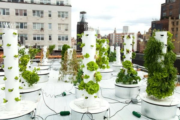 Vertical Hydroponic Gardening 3 - TheCoolist - The Modern Design Lifestyle Magazine