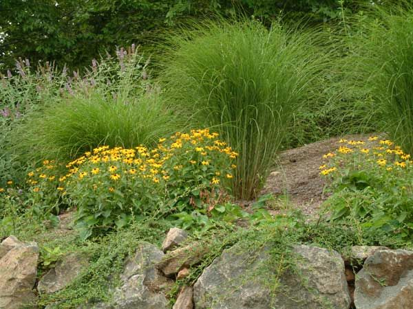 nj front landscape design landscaping ideas front yards and yards