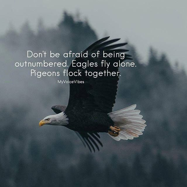 Don T Be Afraid Of Being Outnumbered Eagles Fly Alone Pigeons Flock Together Eagles Quotes Fly Quotes Fear Of Flying