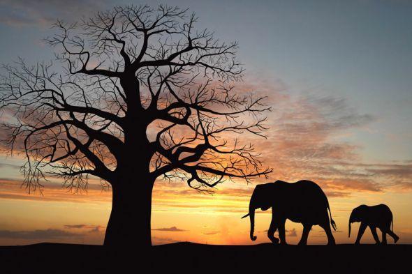 Kenia: Elefanten im Sonnenuntergang