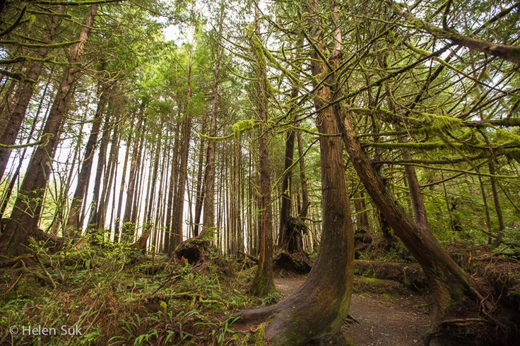 Take a Hike: The Magnificent Trails of Tofino and Ucluelet