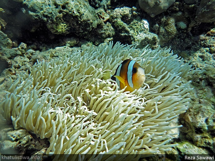 pesona bawah laut Bunaken, Manado, Sulawesi