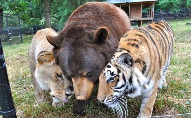 Φιλίες ζώων που φαντάζουν αδύνατες κι όμως είναι αληθινές! (Βίντεο)