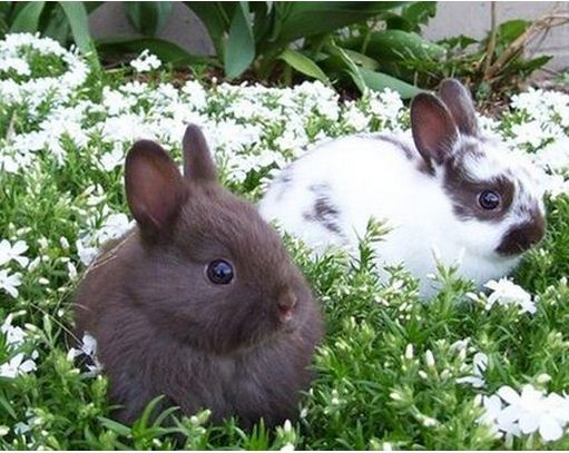 Fluffy Bunnies! | BUNNIES | Pinterest