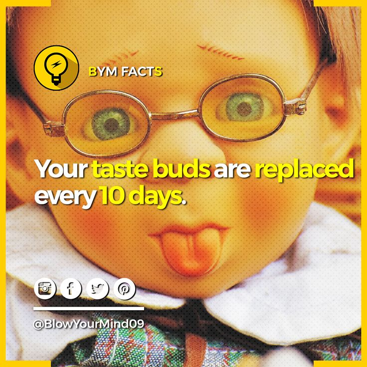 Here is some interesting fact about your taste bud in your tongue😛😛😛. Taste buds go through a life cycle, normal life cycle is anywhere from 10 days to two weeks when they replace itself. Give a thumbs up👍👍👍 to this post if you found this info useful. Don't forget to share this post if you enjoyed this post.👇👇👇🙏🙏🙏