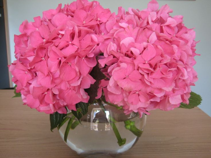 Hydrangea Table Arrangements   Flower care in your home...
