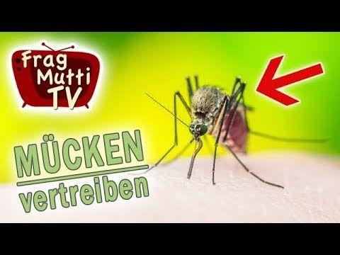 Marvelous M cken u Fliegen vertreiben Frag Mutti TV