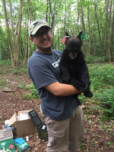 Student receives grant for research into black bear impact on agriculture - Penn State News
