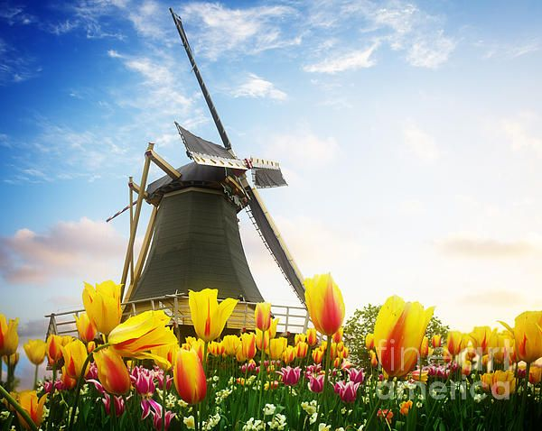 One dutch windmill over tulip flowers field in sunny day, Netherlands Traitional Venice houses over water of small canal in old town at sunset, Italy by Anastasy Yarmolovich