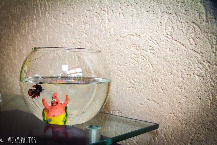 """""""Bob Esponja - O quê você costuma fazer quando não está comigo? Patrick - Fico esperando você voltar."""" #amizade  #vickyphotos #bobesponjaepatrick #patrick #festainfantil @baixinhasebaixinhosbuffet  #vickyphotos #buffetvipkids @deluca186 @vicky_photos_infantis https://www.facebook.com/vickyphotosinfantis http://websta.me/n/vicky_photos_infantis https://www.pinterest.com/vickydfay https://www.flickr.com/vickyphotosinfantis"""