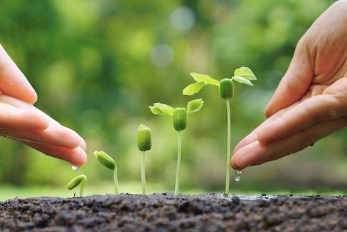 Engrais naturel : 4 recettes pour prendre soin de son jardin