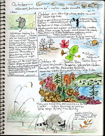 bird watching journal page- lets all collect examples of bird watching project elements to include in the early spring arrival of the birds.  You can also visit www.journaling4faith.com.