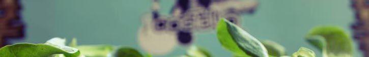 A la orilla del Manzanares, junto al Matadero, abrió hace ya un tiempo una versión más gastronómica del mítico Costello Club: el Costello Río. Una opción genial para disfrutar en familia de una buena hamburguesa, batidos como los de antes o lo que se tercie.  Eso sí, sin dejar nunca de lado la pasión por la buena música que se refleja en todo el local y hace que los papás se sientan orgullosos de compartir una experiencia de este tipo con sus hijos.  Plaza General Maroto 4, 28045 Madrid