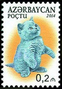 Stamp: British Shorthair (Felis silvestris catus) (Azerbaijan) (Domestic Cats) Mi:AZ 1044A