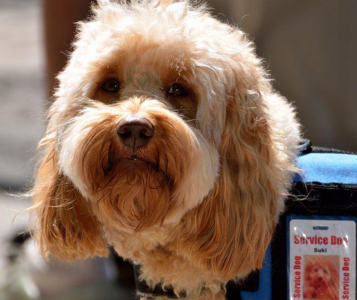 Descubre aquí cómo las mascotas pueden ayudarte en tu proceso de duelo.    #perros de terapia, #duelo, #muerte, #apoyo #mascota, mascotas y duelo, apoyo psicologico de animales