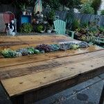 succulent, table, far, out, flora, garden, dog, succulents, pallet, wood, pallets, patio, deck, yard, chair, chairs