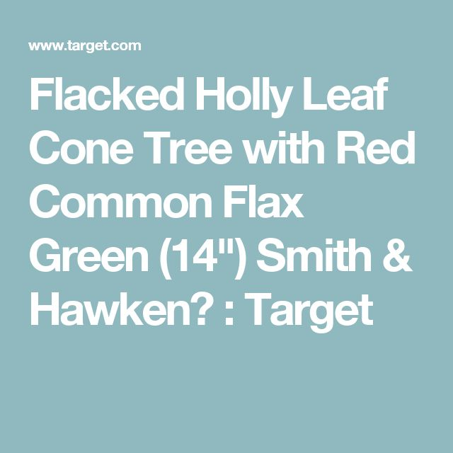 """Flacked Holly Leaf Cone Tree with Red Common Flax Green (14"""") Smith & Hawken™ : Target"""