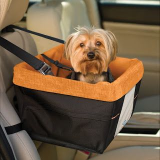 Dog Travel Accessories for Summer 2016 | Australian Dog Lover