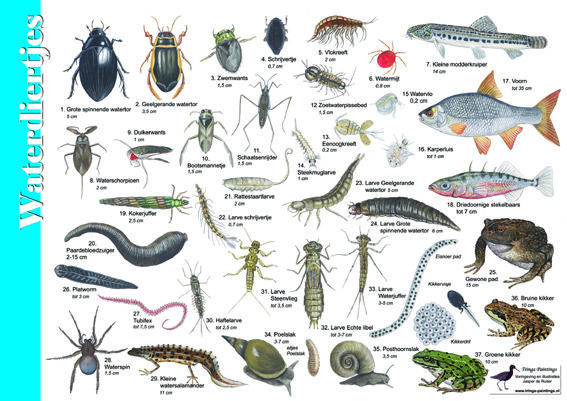 Herkenningskaart / zoekkaart Waterdiertjes