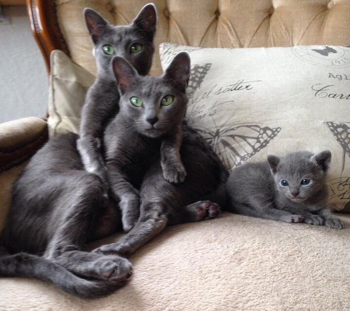A beautiful cat family.
