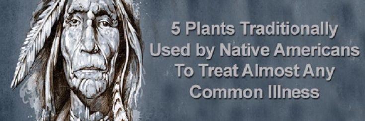 5 medicinale planten die sinds eeuwen door de indianen gebruikt werden