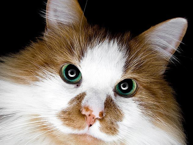 If you're thinking of adopting a kitten, consider a senior cat instead. Read these ten reasons why we love senior cats!