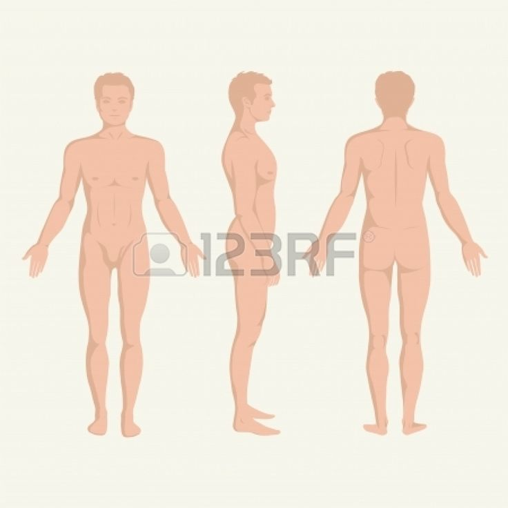 man body anatomy, front, back and side standing human pose  Stock Vector - 24619903