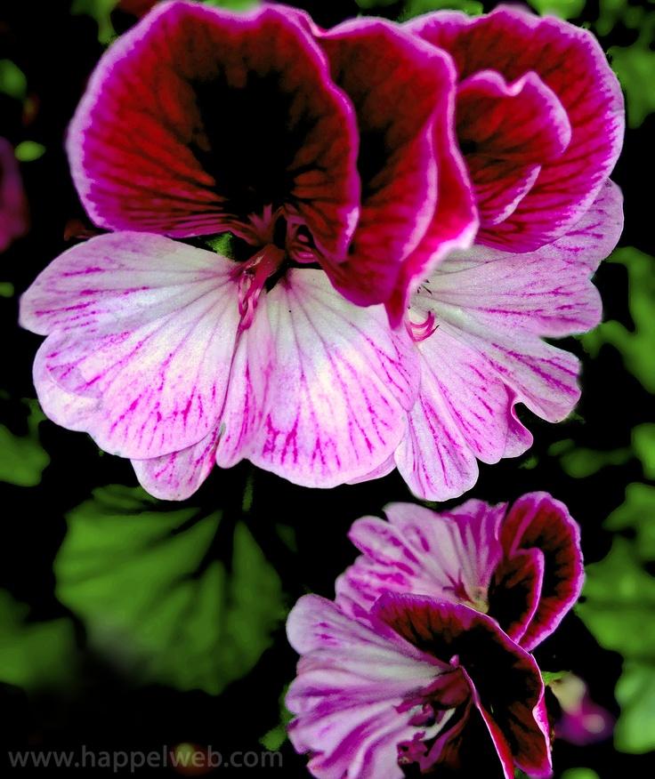 HAPPEL PixShare: Flower #1